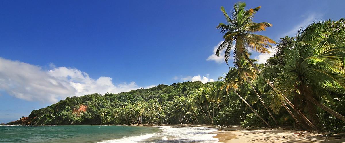 Dominica CIP raises the bar